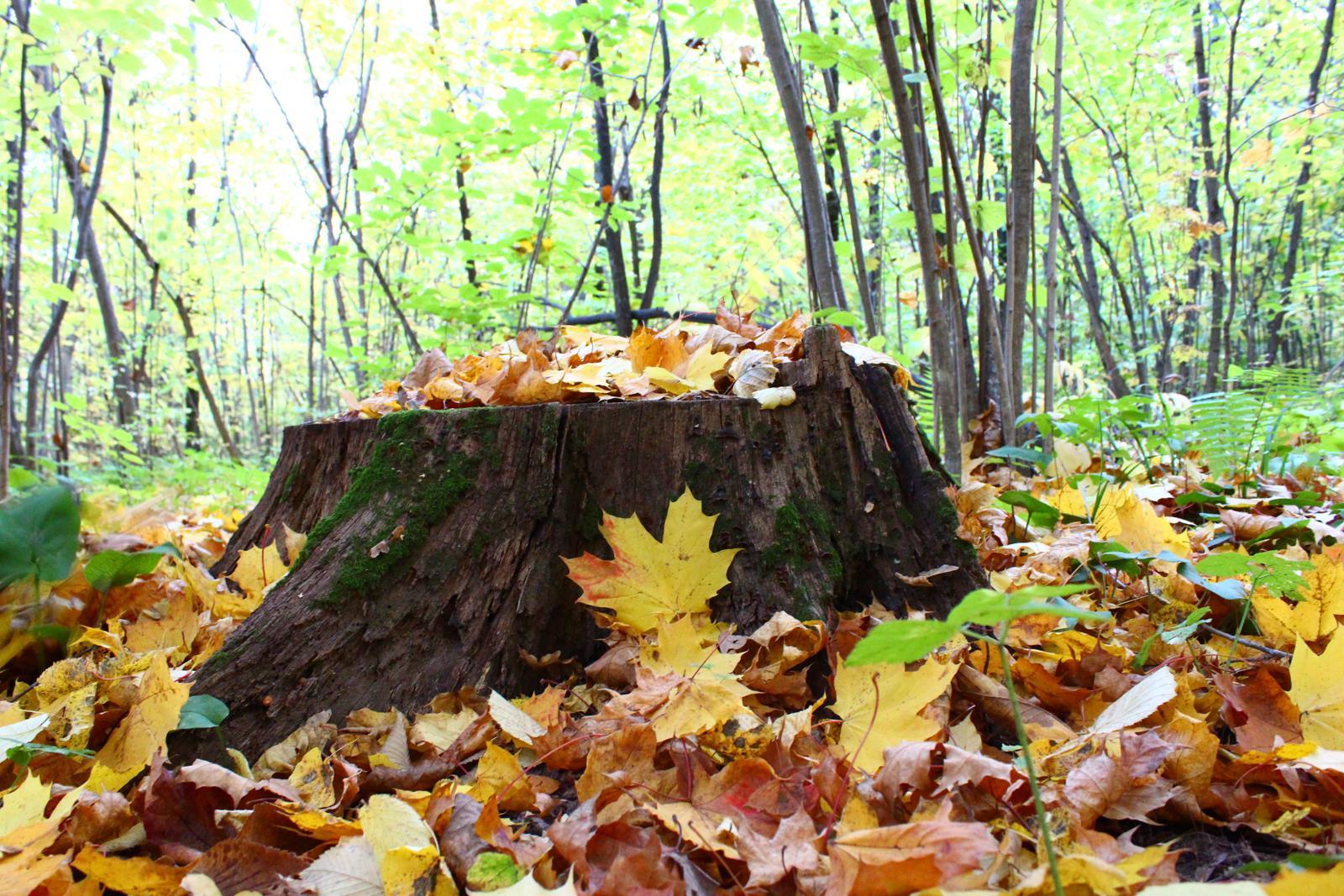 Осень в лесу