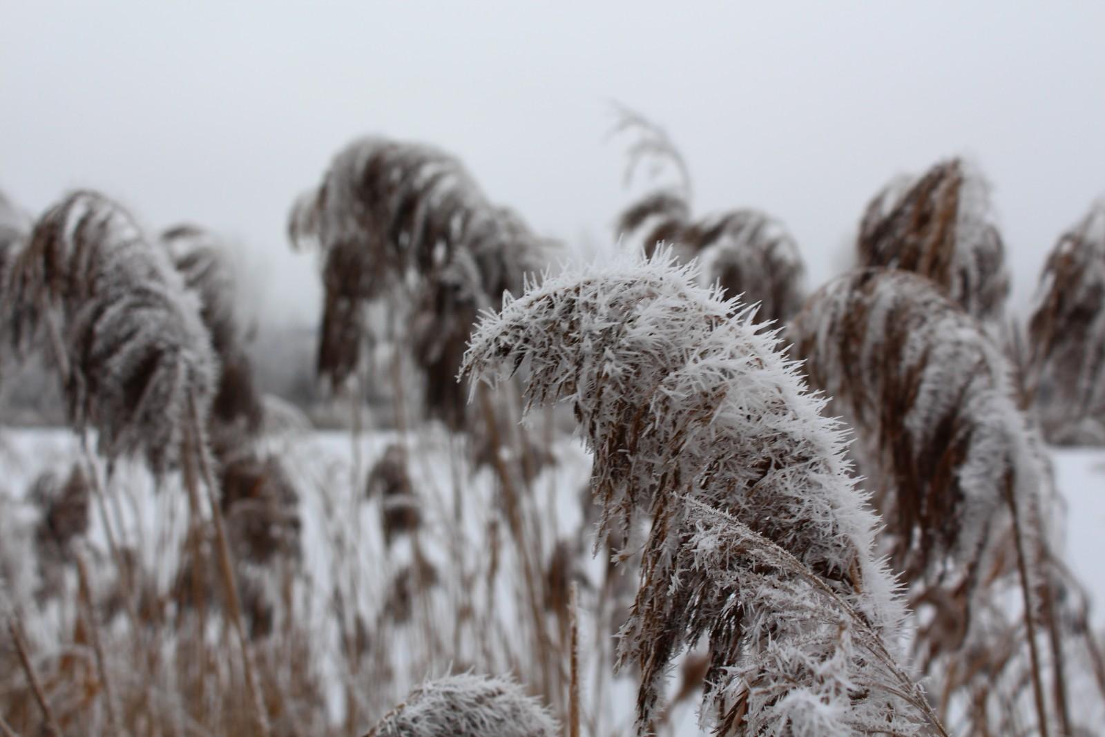 Зима в Нижнем Новгороде