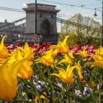 Невозможно не влюбиться — 20 фото весеннего Будапешта