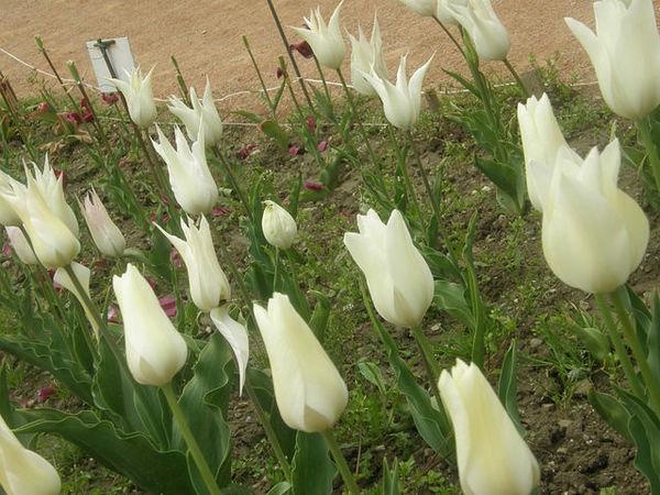 botanicheskijsad_cvety