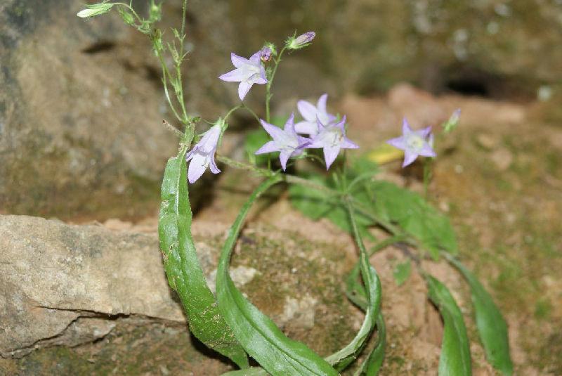 Ичалковские пещеры и цветочки