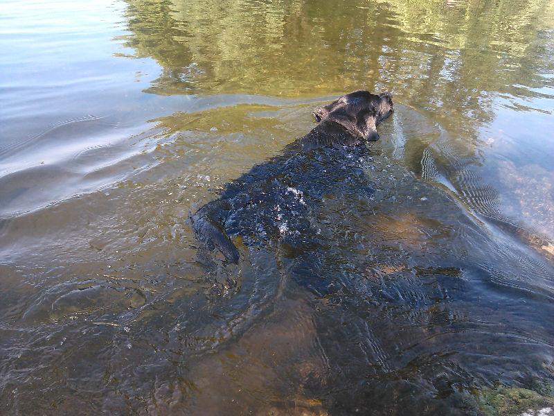 Байрон купается в реке Пьяна