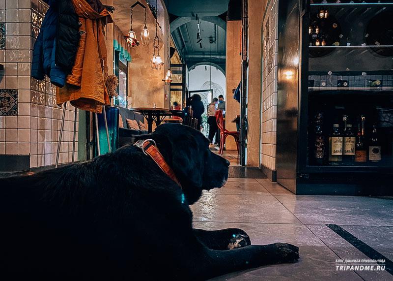 В нормальном пет-френдли заведении собаке должны предложить воды