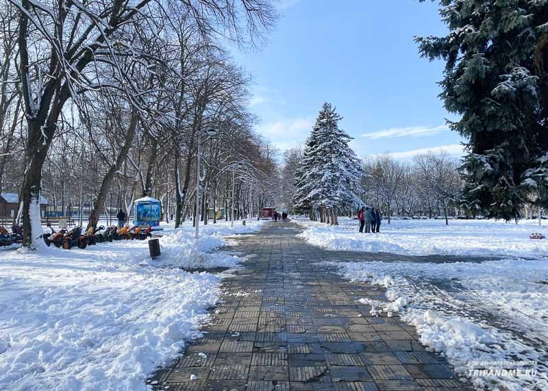 Заснеженные деревья в Чистяковской роще