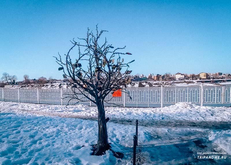 Дерево влюбленных в парке