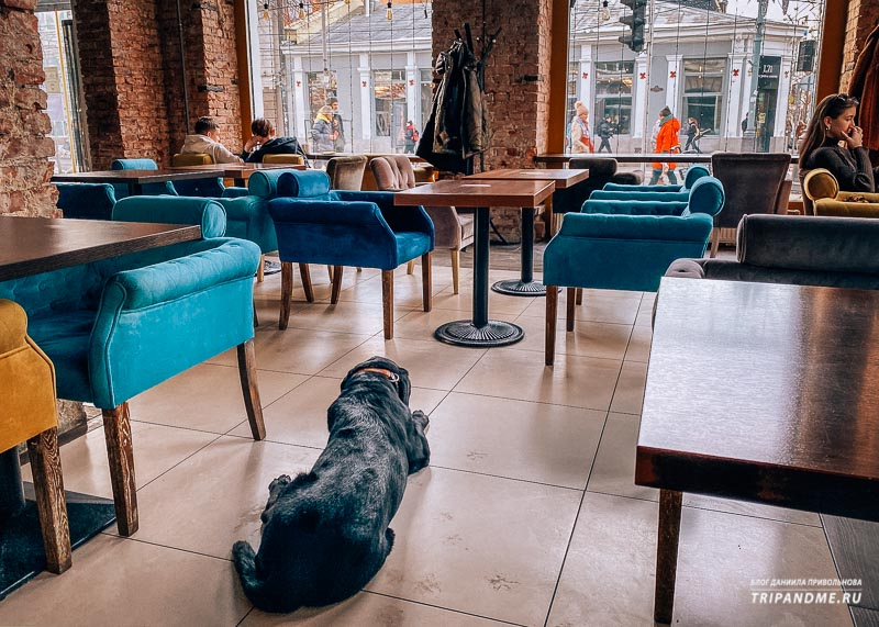 Байрон в дог-френдли кафе Hrum
