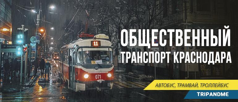 Самый популярный общественный транспорт Краснодара - трамвай