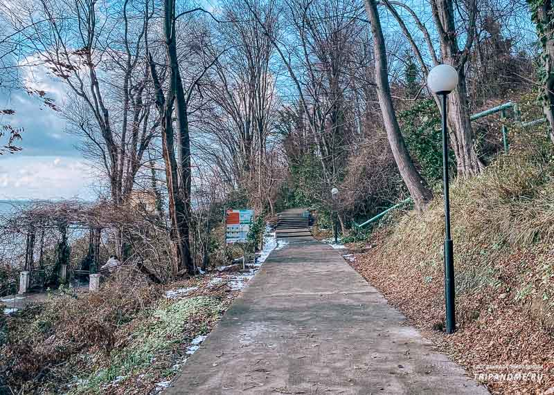 В феврале в Сочи может выпадать снег
