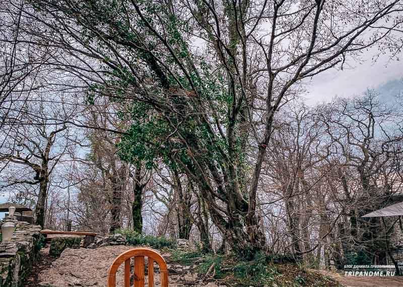 Дерево желаний на Орлиных скалах