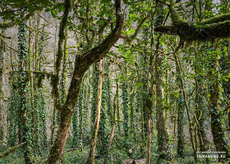 Лес на территории рощи