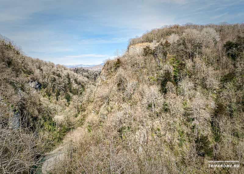 Вид на тисо-самшитовую рощу, виды даже горы