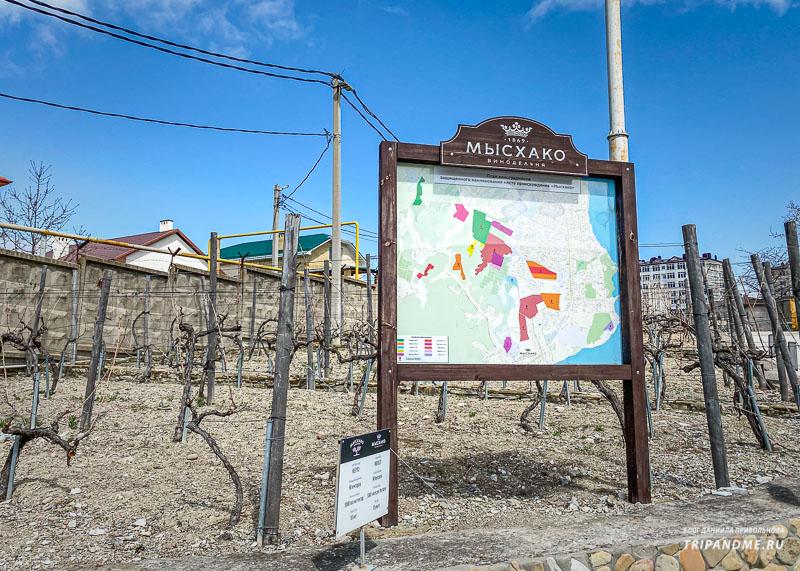 Где и какой виноград растет показано на карте