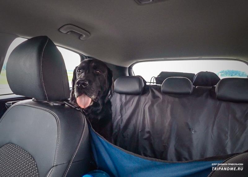 Байрон сидит в гамаке в авто