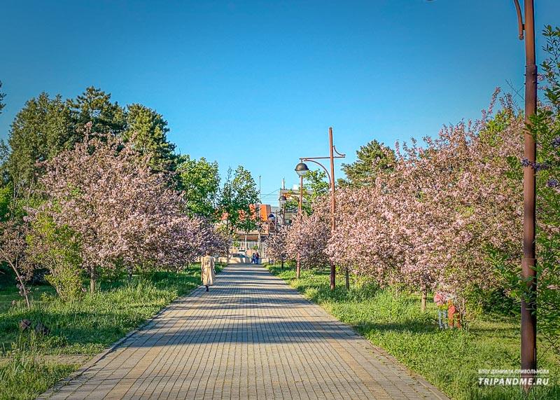 Цветение магнолий в Ботаническом саду