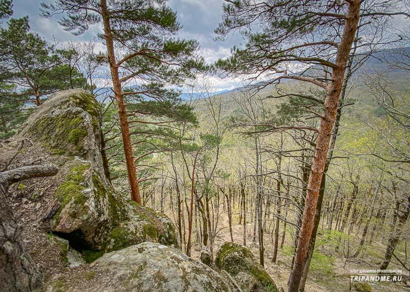 Леса Планческих скал