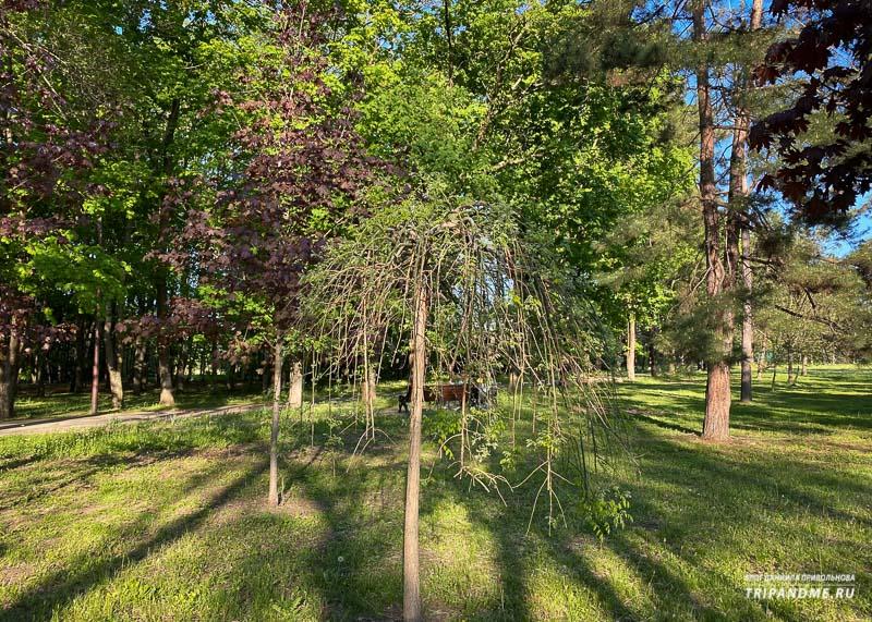 Деревья в Ботаническом саду