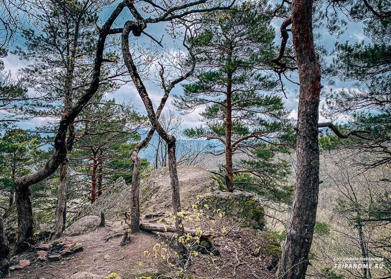 Хвойный лес и природные красоты